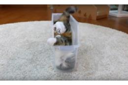 【動画】どうしても入りたい!ちょいデブ猫がスリムなケースに入るために試行錯誤