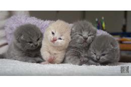 【動画】4匹の子猫!並んで鳴く姿がかわいすぎる