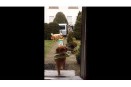 【動画】荷物を次々玄関へ!ワンコチームのお手伝いが素晴らしい