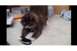 【動画】鳴き声を着信音にした携帯が鳴ったら…