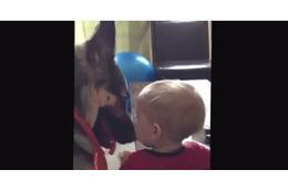 【動画】赤ちゃんを気遣うシェパード