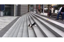 【動画】階段を利用して、1人でボール遊びを完結させる賢い犬