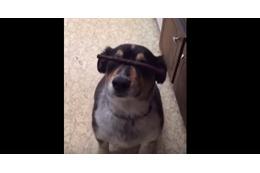 【動画】ワンコが鼻におやつを乗せて『待て』をしていたら…