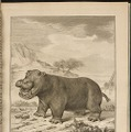 1700年代発刊のビュフォンの「The Natural History of the Hippopotamusor River horse」