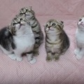 【動画】シンクロする4匹の子猫に悶絶 画像