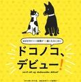糸井重里「ほぼ日」初のアプリは、犬猫写真の収集アプリ「ドコノコ」 画像