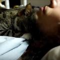 【動画】飼い主とネコ、朝の恒例行事 画像