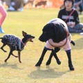 愛犬と様々なアクティビティが楽しめる!「九十九里ビーチドッグフェスティバル2019」開催