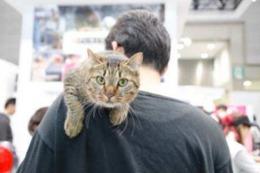 猫関連製品の出展が増加! Interpetsが3月31日に開催 画像