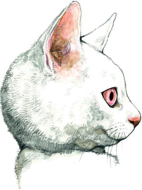 """メラントリックヘムライトの""""猫と変身""""ショップが新宿 ..."""