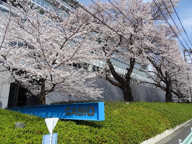 満開の桜が咲き乱れるカシオの八王子技術センターを訪問