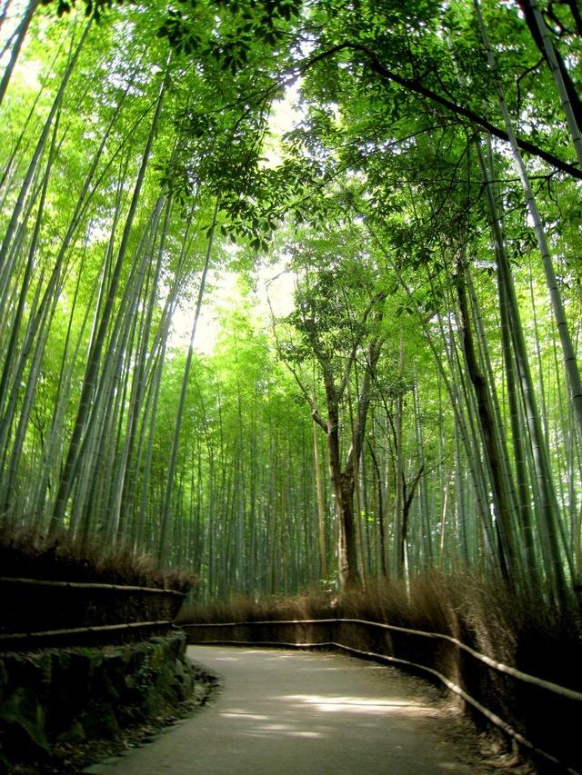 天龍寺と野宮神社を結ぶ、竹林の小径