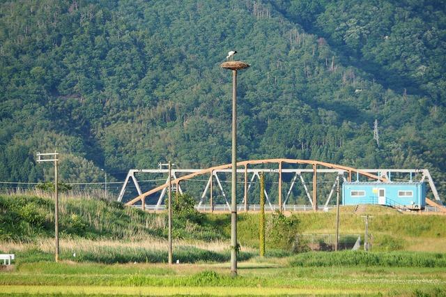 人工鉄塔の上で羽を休めるコウノトリ(タクシー車内から望遠カメラで撮影)。現在、100羽を超えるコウノトリが確認されている